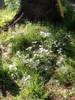 f:id:honda-jimusyo:20100425153357j:plain