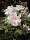 f:id:honda-jimusyo:20100430140020j:plain