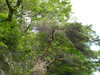 f:id:honda-jimusyo:20100502111909j:plain