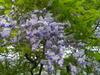 f:id:honda-jimusyo:20100502112117j:plain