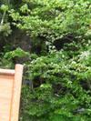 f:id:honda-jimusyo:20100502122014j:plain