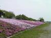 f:id:honda-jimusyo:20100502124847j:plain