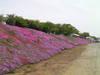 f:id:honda-jimusyo:20100502125203j:plain