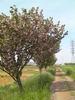 f:id:honda-jimusyo:20100502141905j:plain