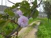f:id:honda-jimusyo:20100502141923j:plain