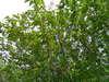 f:id:honda-jimusyo:20100502142711j:plain