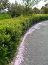 f:id:honda-jimusyo:20100502143730j:plain