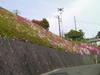 f:id:honda-jimusyo:20100502145841j:plain