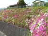 f:id:honda-jimusyo:20100502150012j:plain