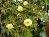 f:id:honda-jimusyo:20100502150903j:plain