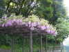 f:id:honda-jimusyo:20100505102642j:plain