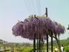 f:id:honda-jimusyo:20100505121452j:plain