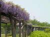f:id:honda-jimusyo:20100505122752j:plain