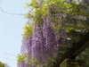 f:id:honda-jimusyo:20100505124638j:plain