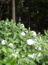 f:id:honda-jimusyo:20100613101056j:plain