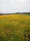 f:id:honda-jimusyo:20100613101508j:plain