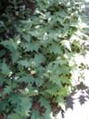 f:id:honda-jimusyo:20100717105145j:plain