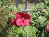 f:id:honda-jimusyo:20100717113501j:plain