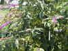 f:id:honda-jimusyo:20100717113520j:plain
