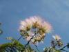f:id:honda-jimusyo:20100717135142j:plain
