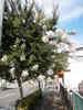 f:id:honda-jimusyo:20100717152119j:plain