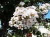 f:id:honda-jimusyo:20100717152131j:plain