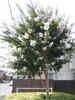 f:id:honda-jimusyo:20100717152239j:plain