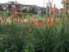 f:id:honda-jimusyo:20100717161210j:plain