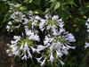 f:id:honda-jimusyo:20100717161231j:plain