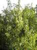 f:id:honda-jimusyo:20100717164606j:plain