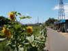 f:id:honda-jimusyo:20100718111045j:plain