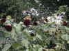 f:id:honda-jimusyo:20100731151054j:plain