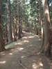 f:id:honda-jimusyo:20100904115019j:plain