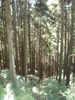 f:id:honda-jimusyo:20100918120523j:plain