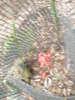 f:id:honda-jimusyo:20100918134330j:plain