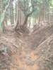 f:id:honda-jimusyo:20100918152647j:plain