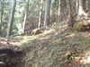 f:id:honda-jimusyo:20100918154319j:plain