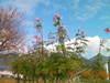 f:id:honda-jimusyo:20101120100441j:plain