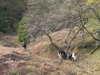 f:id:honda-jimusyo:20101120102140j:plain
