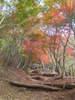 f:id:honda-jimusyo:20101120110226j:plain