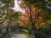 f:id:honda-jimusyo:20101120111356j:plain