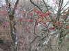 f:id:honda-jimusyo:20101120123813j:plain