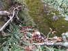 f:id:honda-jimusyo:20101120132654j:plain