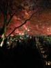 f:id:honda-jimusyo:20101128171233j:plain