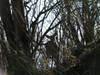 f:id:honda-jimusyo:20101204134612j:plain