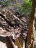 f:id:honda-jimusyo:20101204142507j:plain