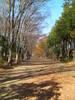 f:id:honda-jimusyo:20101205102917j:plain