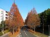 f:id:honda-jimusyo:20101205141120j:plain