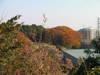 f:id:honda-jimusyo:20101205144041j:plain