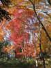 f:id:honda-jimusyo:20101205144327j:plain
